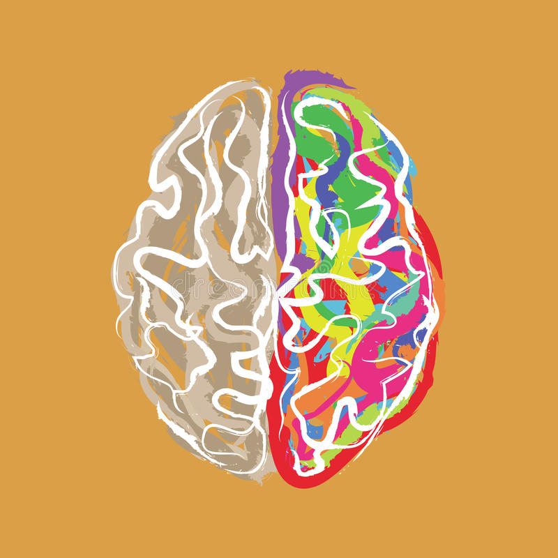 El cerebro creativo con color frota ligeramente vector libre illustration