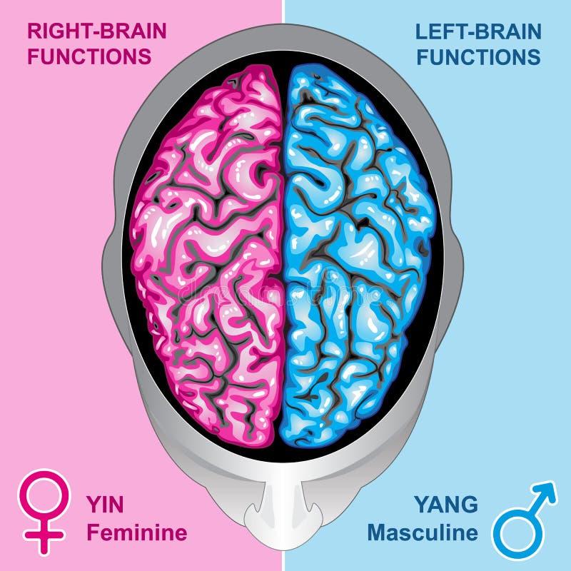 El cerebro humano a la izquierda e a la derecha funciona ilustración del vector