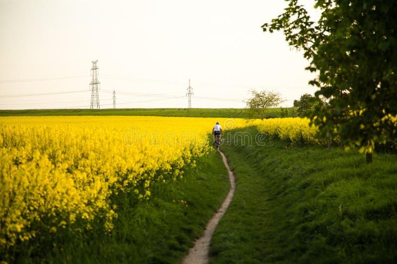 El ciclista monta una carretera nacional a lo largo de campos de florecimiento imagenes de archivo