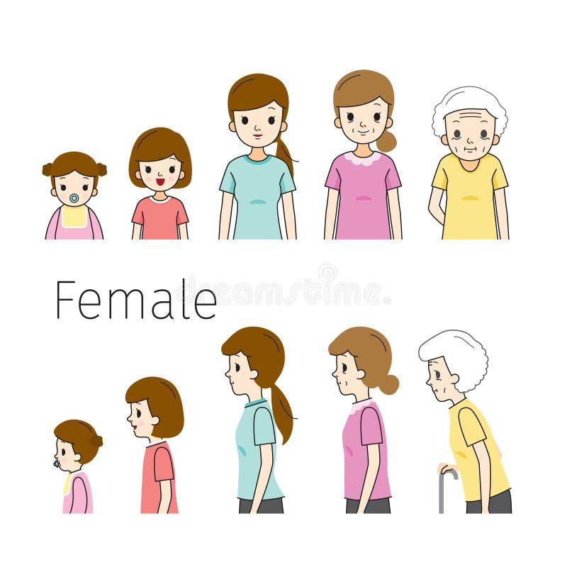 El ciclo de vida de la mujer Generaciones y etapas del crecimiento del cuerpo humano Diversas edades, bebé, niño, adolescente, ad libre illustration