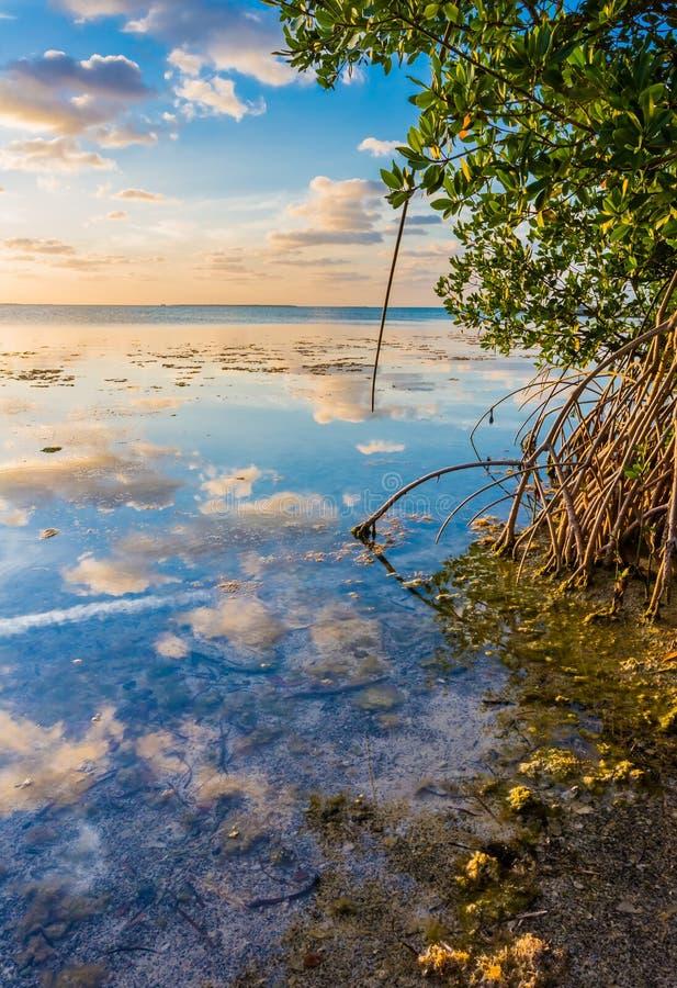 El cielo colorido reflejó en el agua de la laguna del mangle fotos de archivo libres de regalías