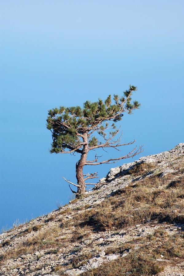 El cielo, rocas, un pino y una ladera fotografía de archivo libre de regalías