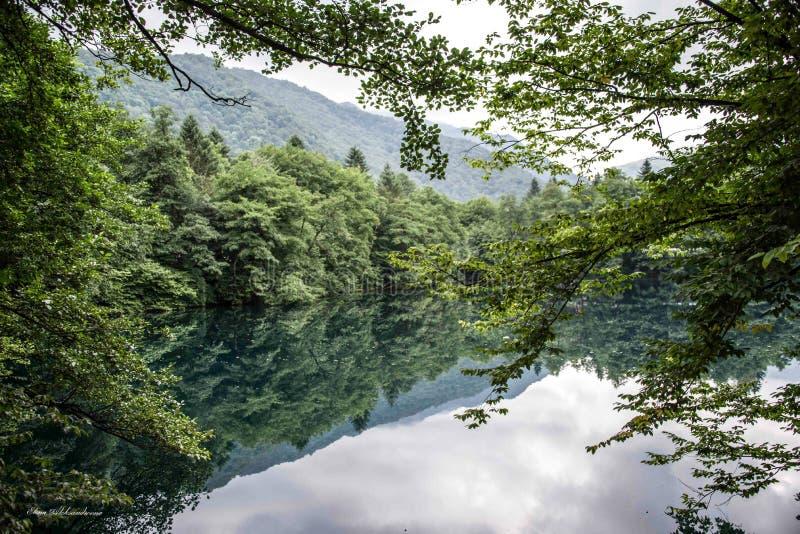 El cielo se refleja en el lago entre el bosque imagen de archivo libre de regalías