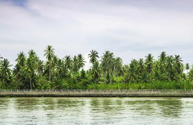 El cielo y la atmósfera de restauración de la plantación del coco fotos de archivo