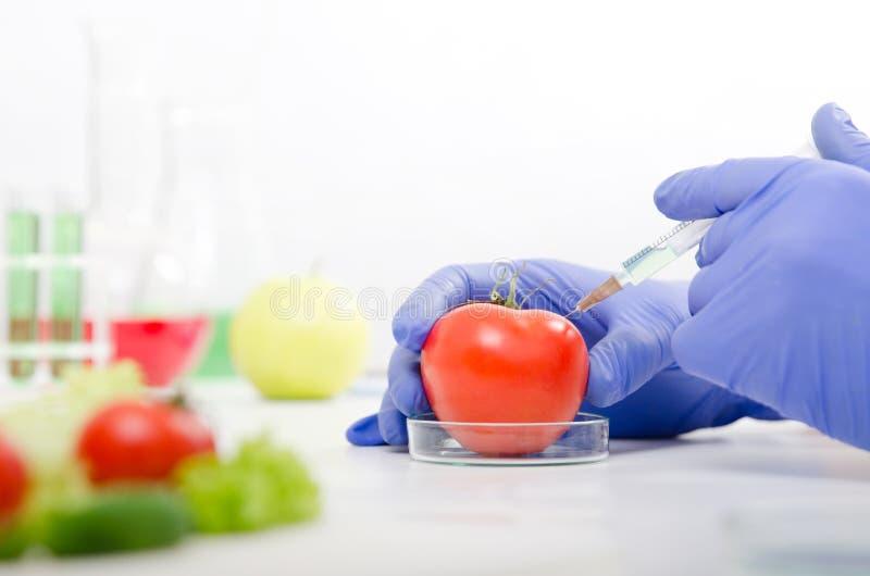 El científico está trabajando en la comida genético modificada imagen de archivo libre de regalías