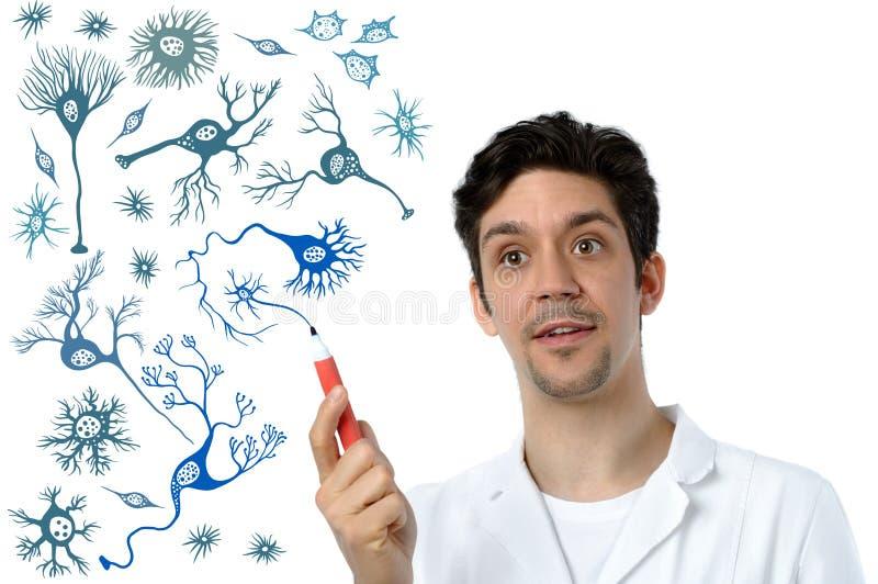 El científico joven o el especialista médico explica sobre las neuronas imagen de archivo