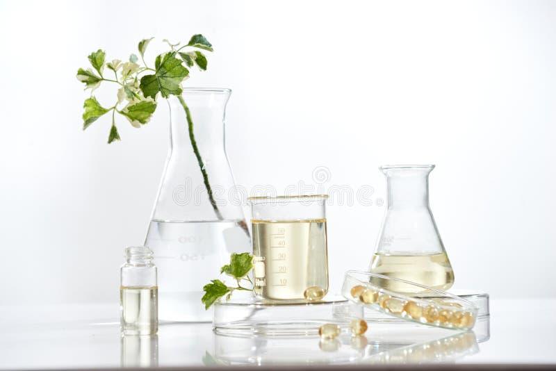El cient?fico o el doctor hace la medicina herbaria de la hierba en el laboratorio en la tabla Tratamiento alternativo mano de la imágenes de archivo libres de regalías