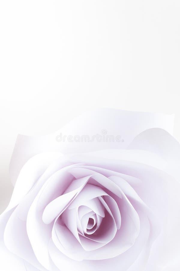 El cierre delicado de la rosa del blanco para arriba empañó el fondo abstracto ilustración del vector