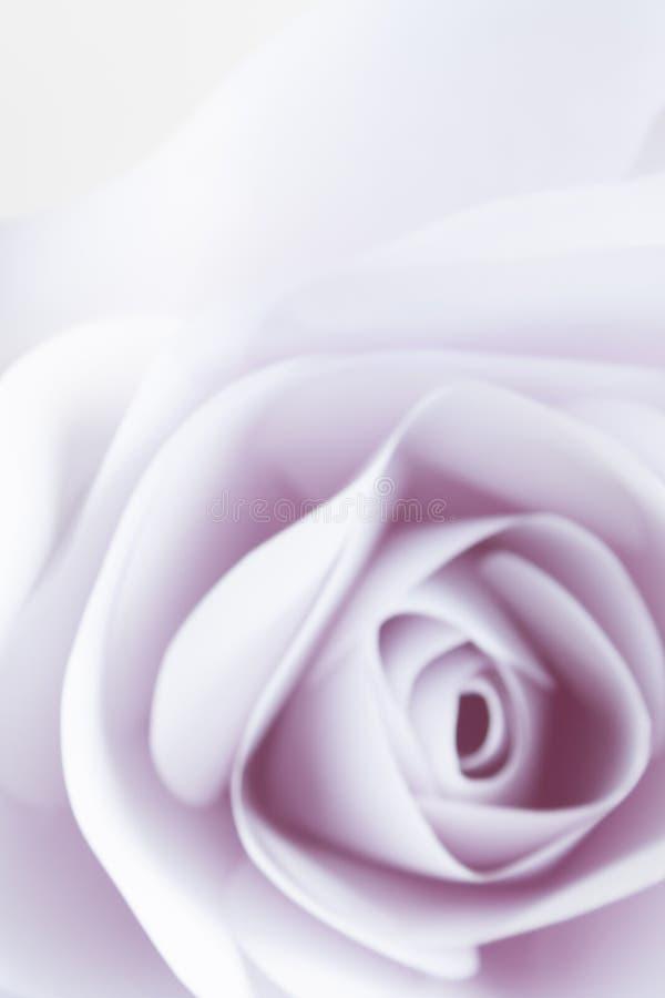 El cierre delicado de la rosa del blanco para arriba empañó el fondo abstracto stock de ilustración