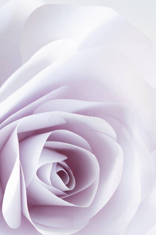 El cierre delicado de la rosa del blanco para arriba empañó el fondo abstracto libre illustration