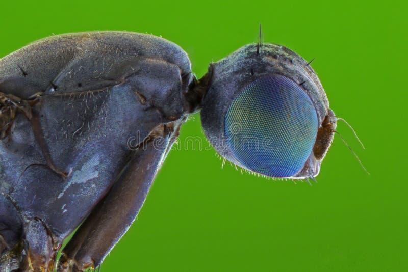 El cierre extremo para arriba de moscas fotos de archivo libres de regalías