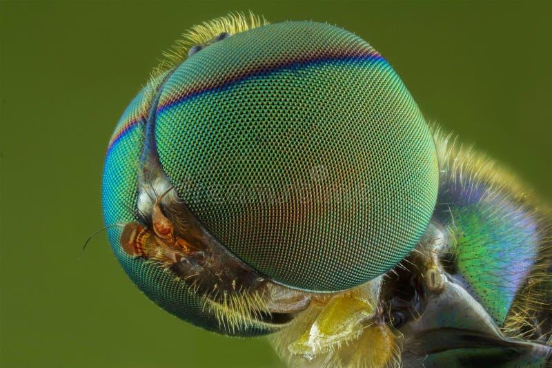 El cierre extremo para arriba de moscas imagenes de archivo