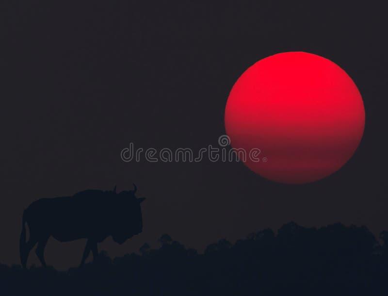 El claro de luna forma cómo algunos animales se mueven fotos de archivo