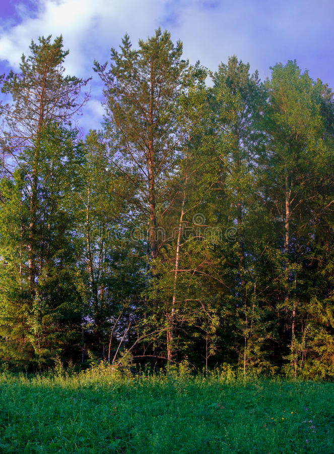 El claro del bosque del verano de la estación se nubla panorama del cielo imagenes de archivo