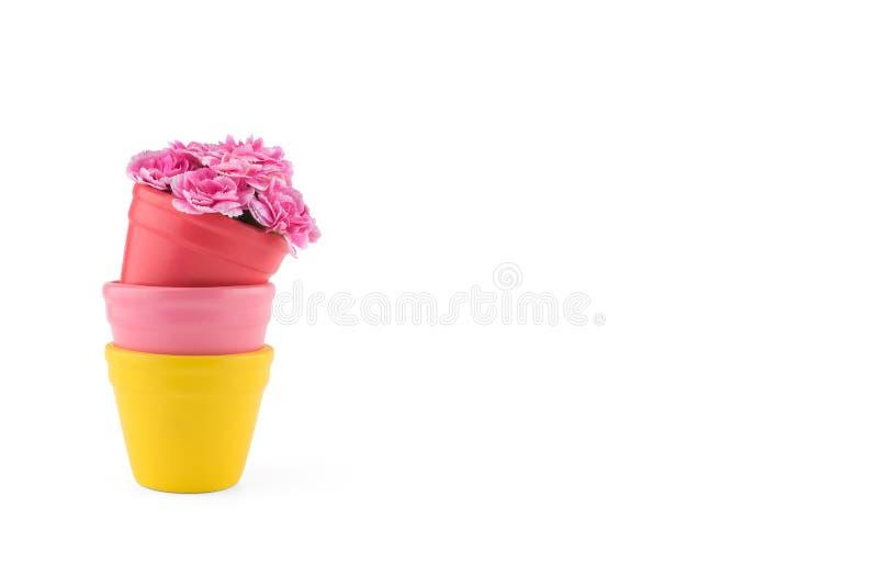 El clavel rosado florece el ramo en potes coloridos fotografía de archivo