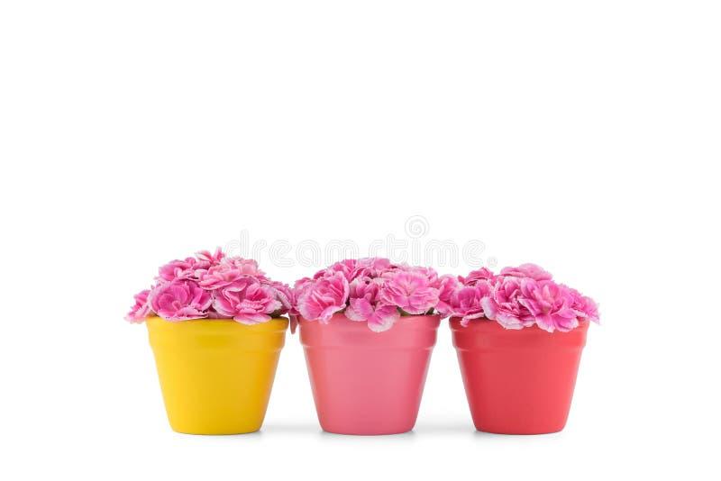 El clavel rosado florece el ramo en potes coloridos imágenes de archivo libres de regalías
