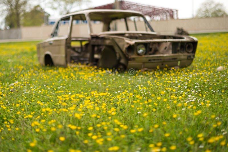 El coche roto oxidado viejo está en el medio del campo de flores amarillas foto de archivo