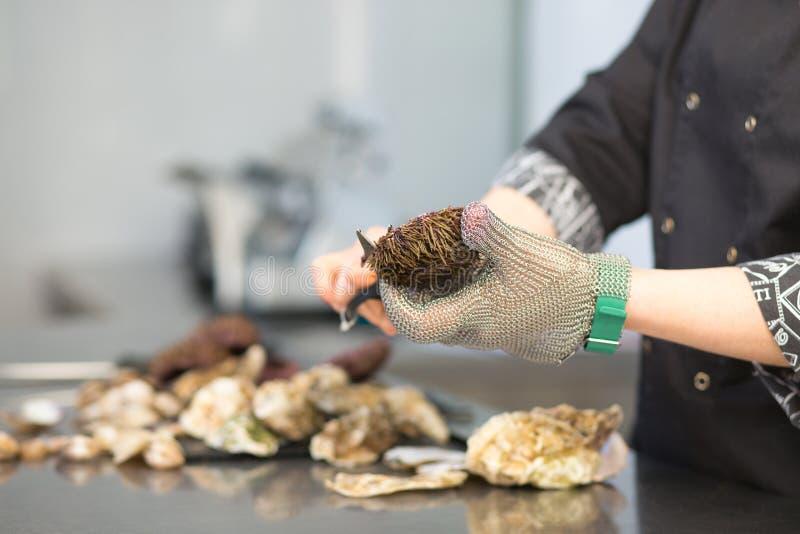 El cocinero del cocinero corta al erizo de mar Echinoidea con las tijeras en la cocina del restaurante Primer de una mano en un g fotos de archivo