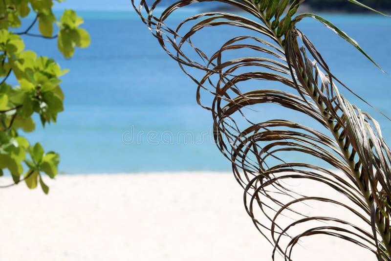 El coco seco se va en la playa blanca de la arena foto de archivo