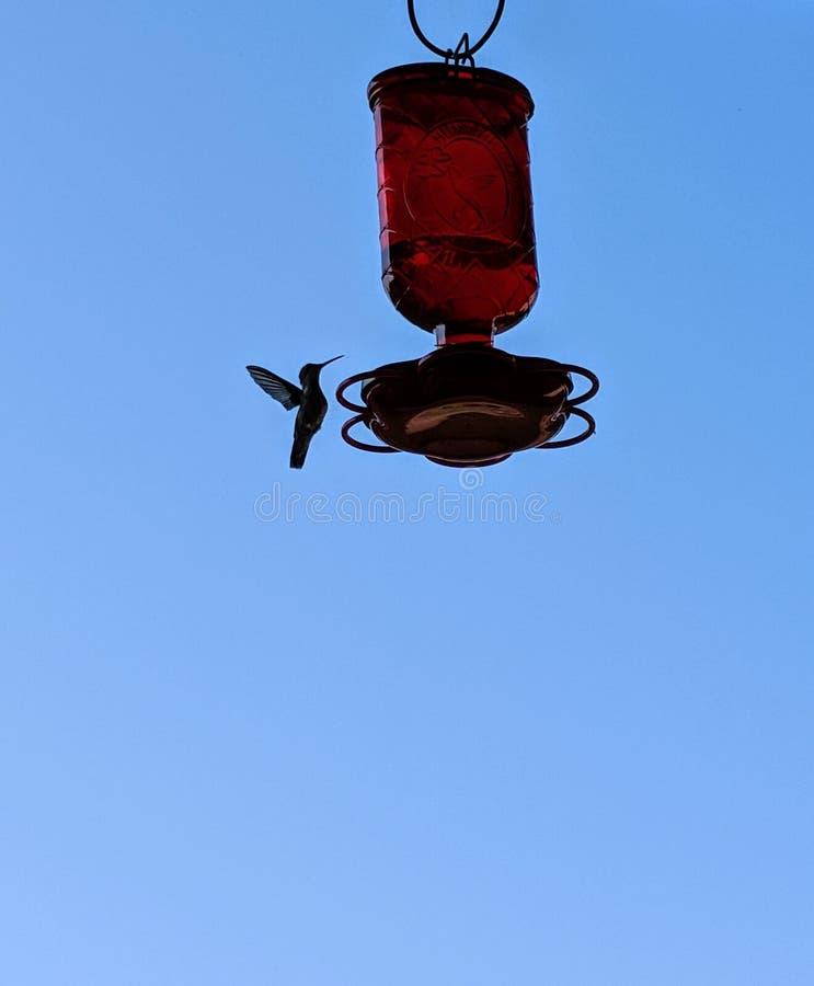 El colibrí se acerca a un alimentador colgante en una mañana soleada del verano fotografía de archivo