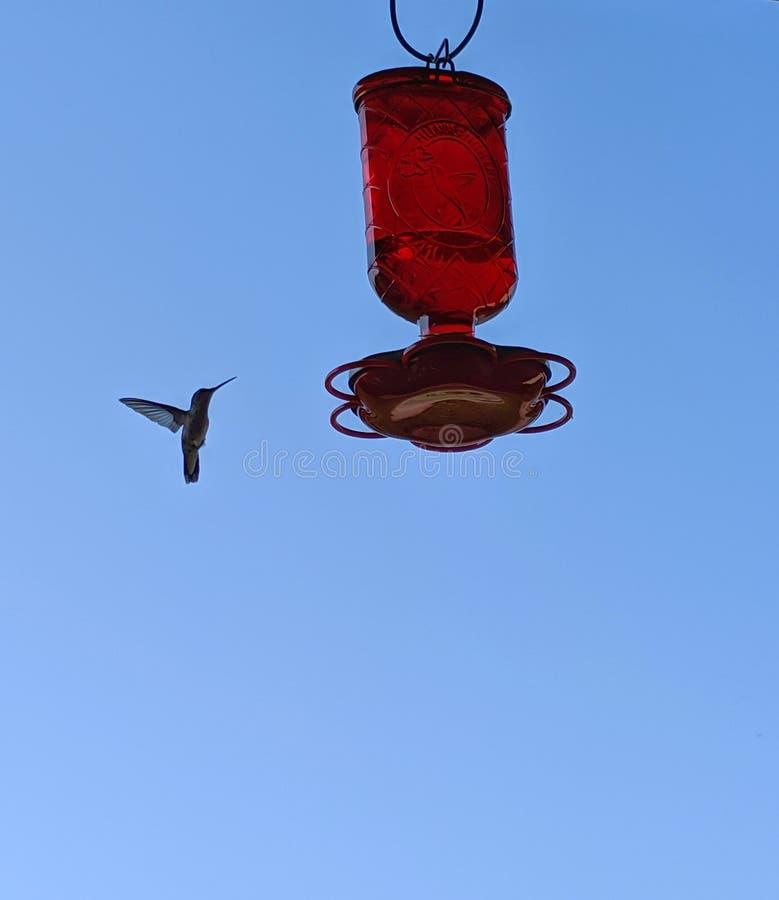 El colibrí se acerca a un alimentador colgante en una mañana soleada del verano imagenes de archivo