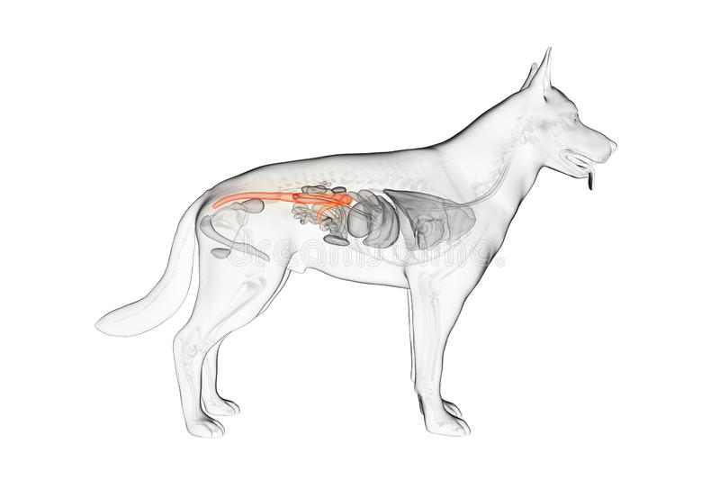 El colon canino libre illustration