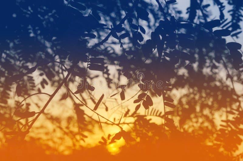 El color abstracto deja el fondo de la silueta fotos de archivo libres de regalías