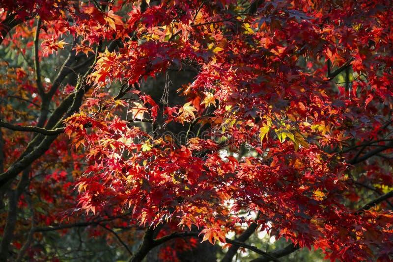 El color de las hojas del otoño/de la caída imágenes de archivo libres de regalías