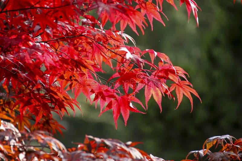 El color de las hojas del otoño/de la caída fotografía de archivo
