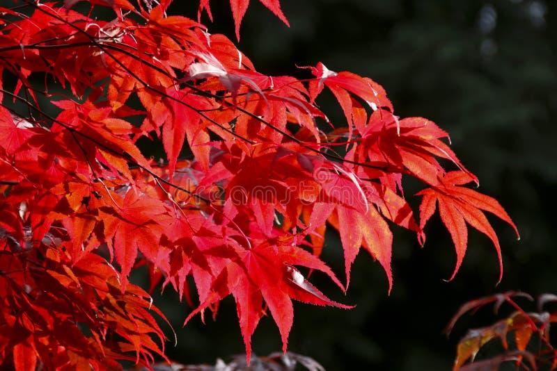 El color de las hojas del otoño/de la caída fotos de archivo libres de regalías