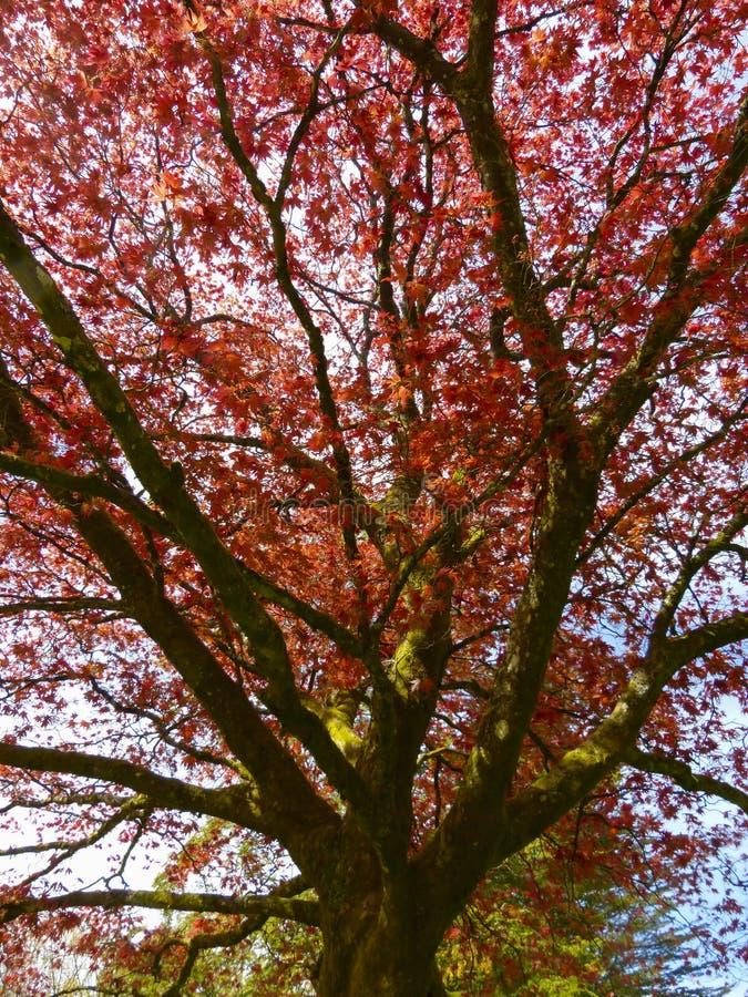 El color de las hojas del otoño/de la caída fotografía de archivo libre de regalías