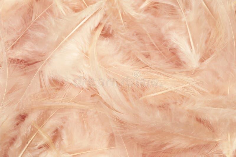El color de rosa empluma el fondo _3 fotos de archivo