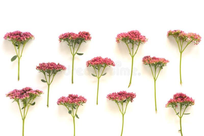 El color de rosa florece el fondo _1 fotos de archivo