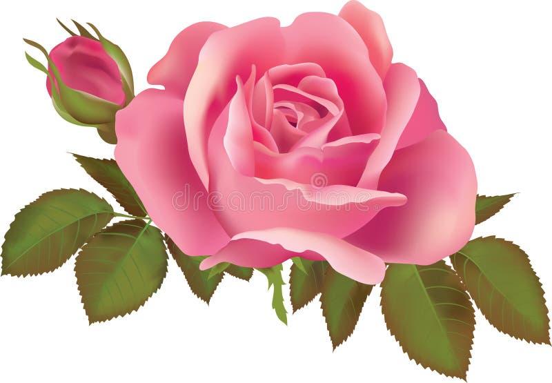 El color de rosa se levantó stock de ilustración