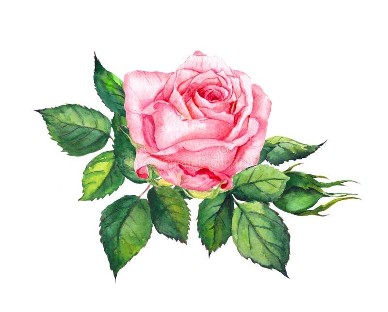El color de rosa se levantó con las hojas Acuarela para casarse, tarjeta de fecha de la reserva libre illustration