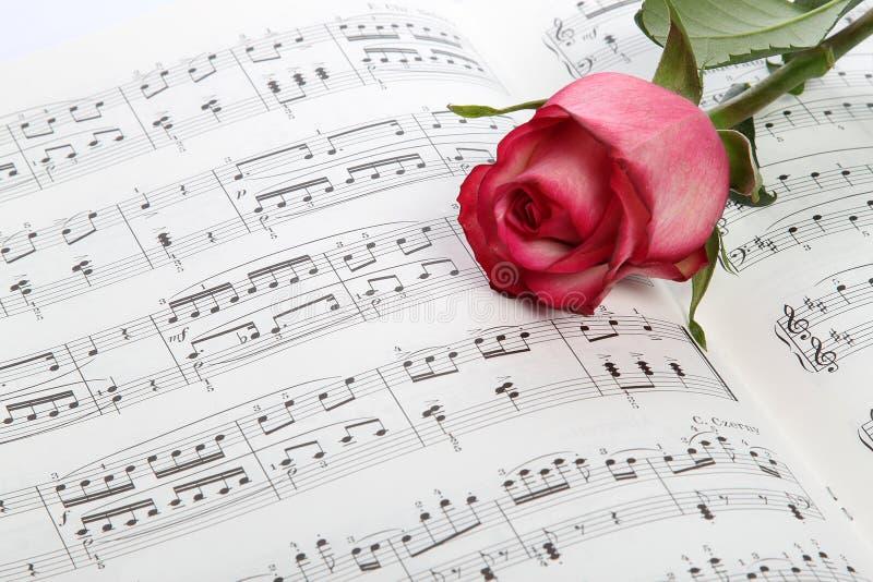 El Color De Rosa Se Levantó En Música De Hoja Foto de archivo ...