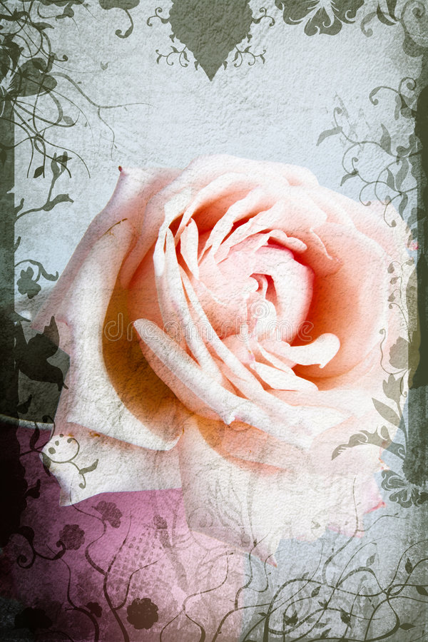 El color de rosa y el amarillento se levantaron stock de ilustración
