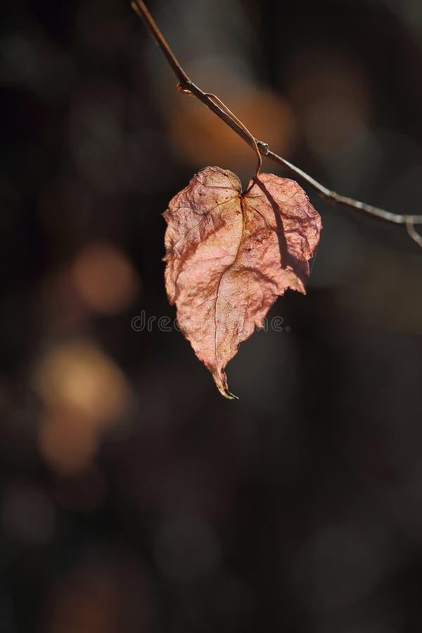 El color del autum fotos de archivo