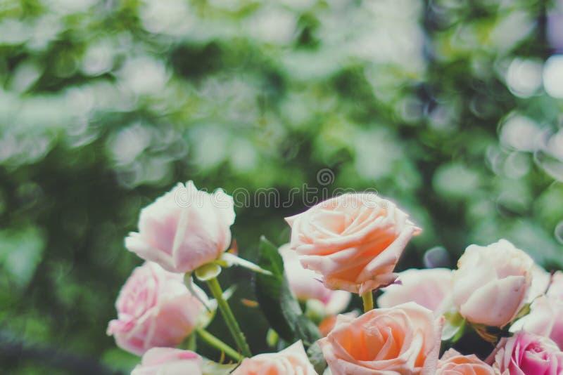 El color en colores pastel dulce borroso de flores color de rosa en bokeh texturiza la falta de definición suave para el fondo fotos de archivo