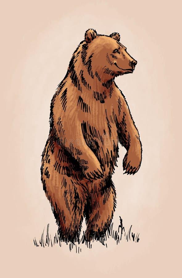 El color graba al oso grizzly aislado stock de ilustración