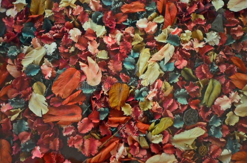 El color secado da fruto y se va en el vidrio imagen de archivo