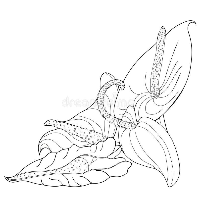 El colorante es flamenco de la flor del Anthurium Ilustración del vector stock de ilustración