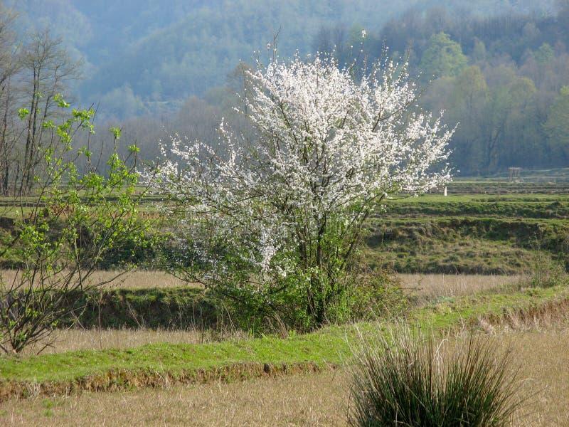 El comenzar de la aparición de árboles en primavera: Irán, Gilan imagen de archivo