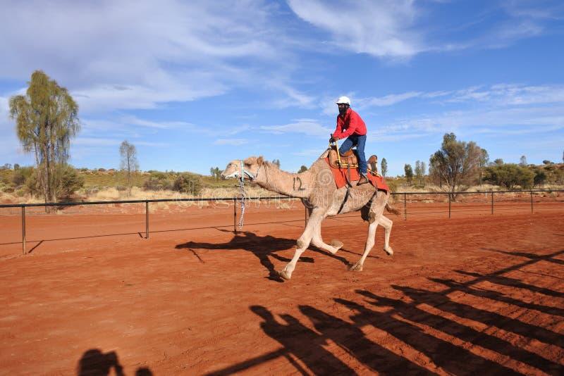 El competir con de camello en el Territorio del Norte Australia de Uluru Yulara fotos de archivo