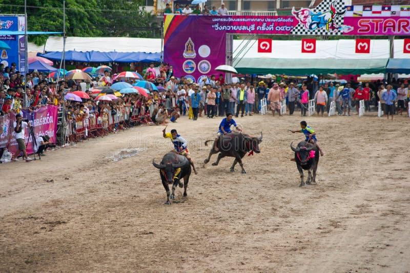 El competir con del búfalo del festival imagen de archivo