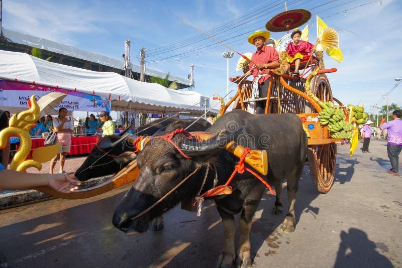 El competir con del búfalo del festival imágenes de archivo libres de regalías