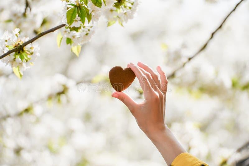 El concepto de amor para la naturaleza Floraci?n del verano Tome el cuidado de la naturaleza foto de archivo