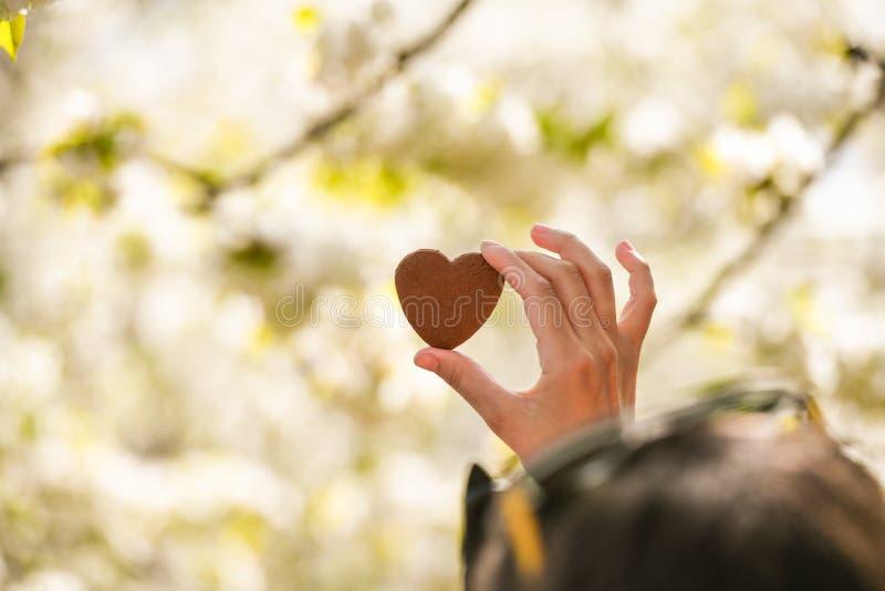 El concepto de amor para la naturaleza Floraci?n del verano Tome el cuidado de la naturaleza imagen de archivo libre de regalías