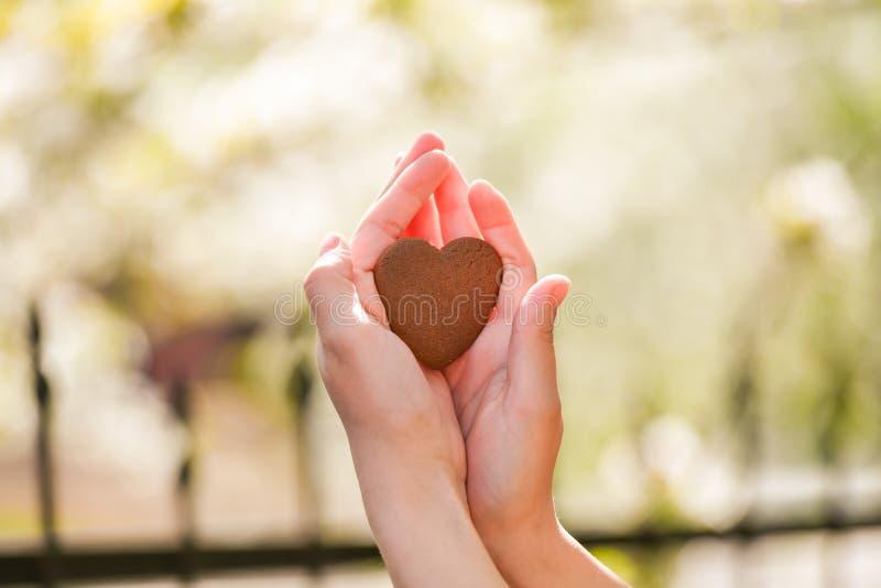 El concepto de amor para la naturaleza Floraci?n del verano Tome el cuidado de la naturaleza fotografía de archivo