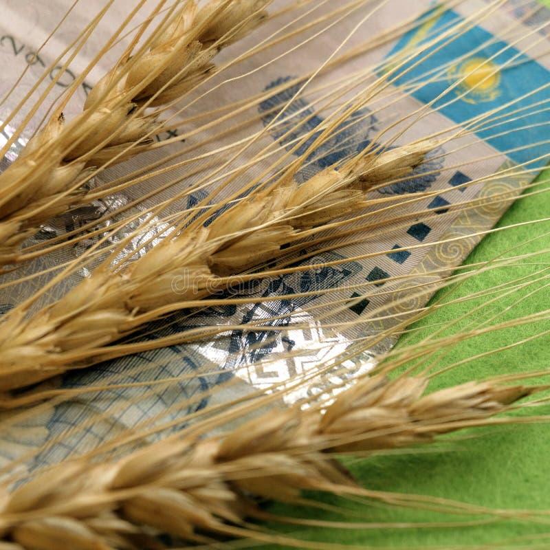 El concepto de cambiar el precio del grano en Kazajistán Primer Tres espiguillas de trigo mienten en el fondo de un billete de ba fotos de archivo libres de regalías